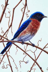 Lafayette County Bluebird Society